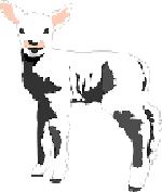 Lamm, Ziege, Strauß
